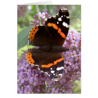 Butterfly Card - Red Admiral
