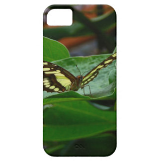 Butterfly iPhone 5/5S Cases