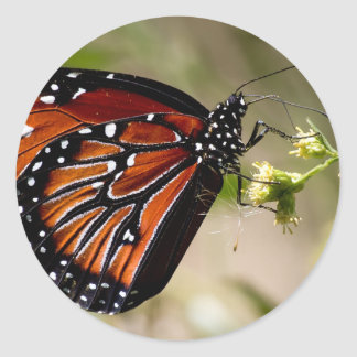 Butterfly Classic Round Sticker, Glossy Round Sticker