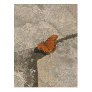 Butterfly Dreams Postcard