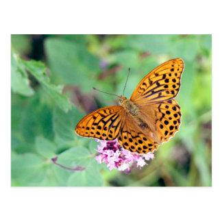 Butterfly: Emperor coat Postcard