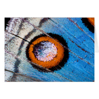 Butterfly false eye close up card