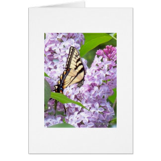 Butterfly Feeding Greeting Card