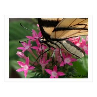 Butterfly Feeding Macro Postcard