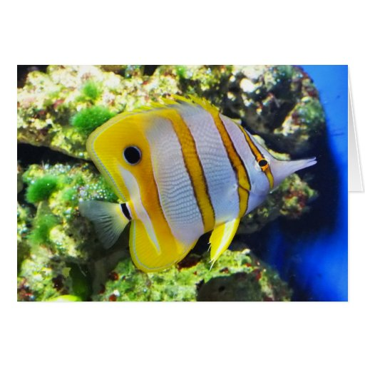 Butterfly fish greeting cards
