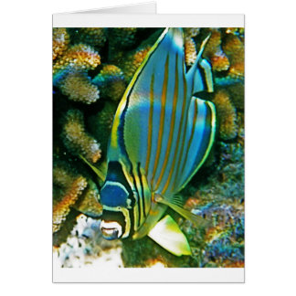Butterfly Fish - Front facing Greeting Card