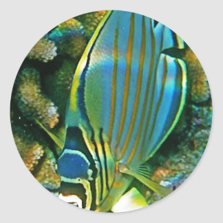 Butterfly Fish - Front facing Round Sticker