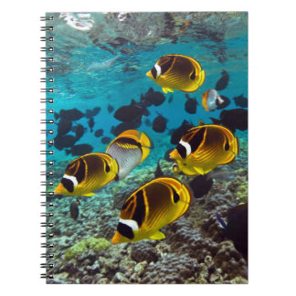 Butterfly fish spiral note book