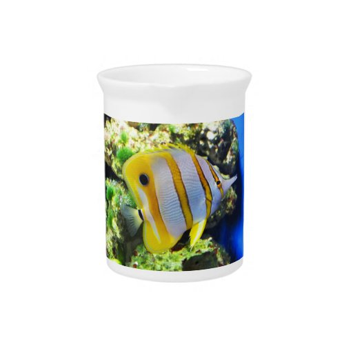 Butterfly fish pitchers