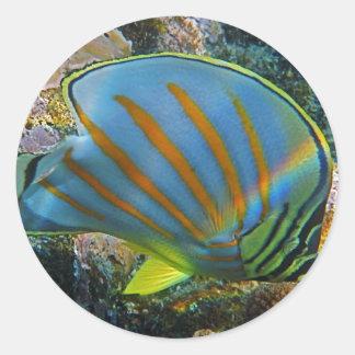 Butterfly Fish Round Sticker