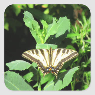 Butterfly, Folsom, California Square Sticker