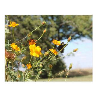 Butterfly II Postcard