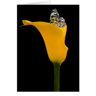 butterfly in calla lily card