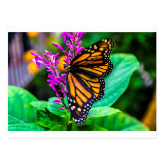 Butterfly in Nature Postcard