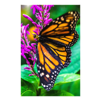 Butterfly in Nature Stationery