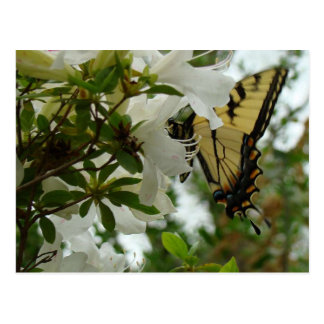 Butterfly in Spring Postcard