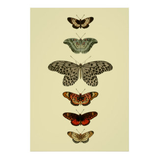 Butterfly Insects Collection Poster