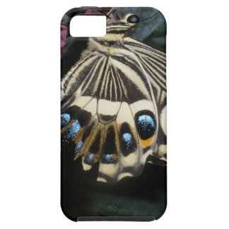 Butterfly iPhone 5/iPhone 5S Case-Mate Tough™ Case iPhone 5 Cases