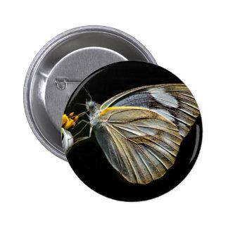 Butterfly Knapp