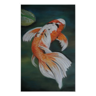 Butterfly Koi Fish Poster