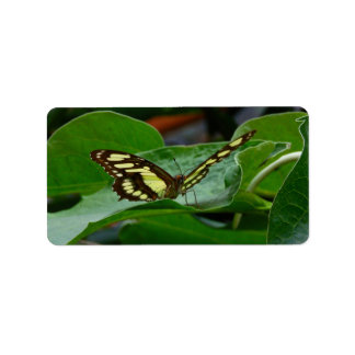 Butterfly Labels