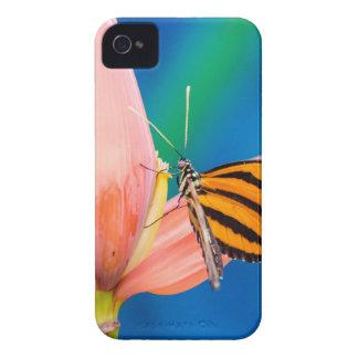 Butterfly Landing on Purple Flower iPhone 4 Case-Mate Case