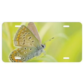 Butterfly License Plate
