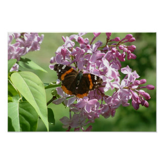 Butterfly & Lilacs Poster