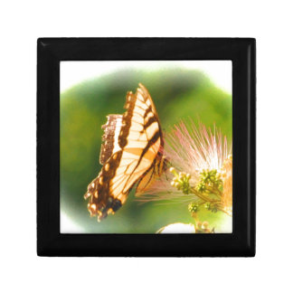butterfly mimosa tree gift box