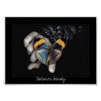 butterfly, Natures beauty Poster