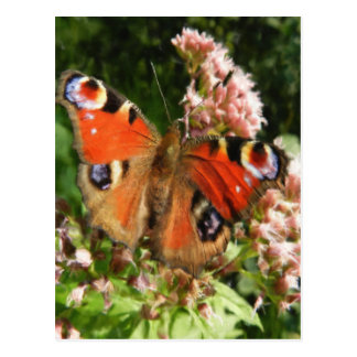 Butterfly Oil Painting Postcard