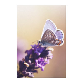 Butterfly on a bit of lavender canvas print