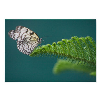 Butterfly on a Branch Poster