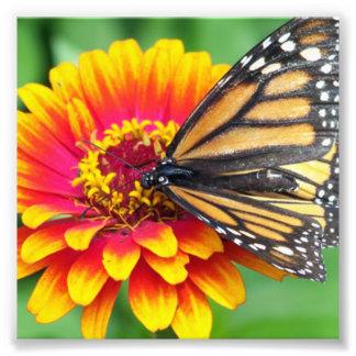 Butterfly on a Flower Photo Art