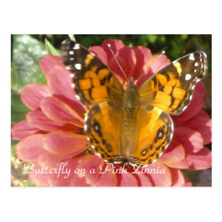 Butterfly on a Pink Zinnia Postcard