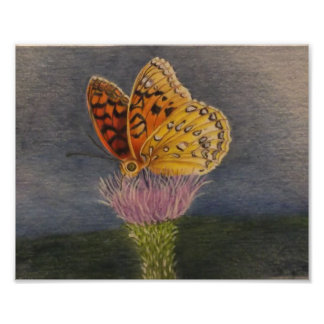Butterfly on a Thistle Poster