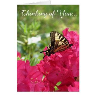 Butterfly on Azalea  Thinking of You Card