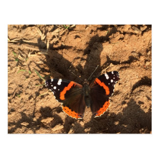 butterfly on dirt postcard