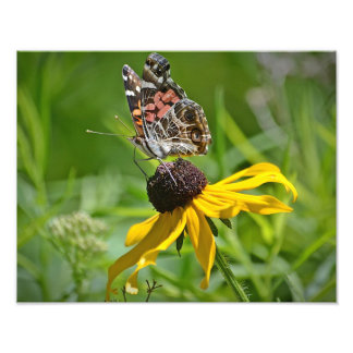 Butterfly On Flower Photo Print