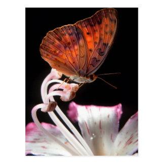 Butterfly On Flower, Rustenburg, Northwest Postcard