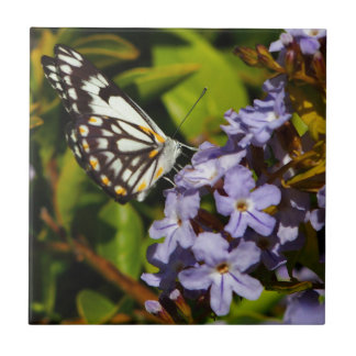 Butterfly on flower square tile