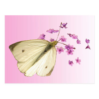 Butterfly on Flowers Postcard