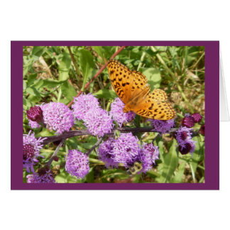 Butterfly on Gayfeater II Blank Notecard