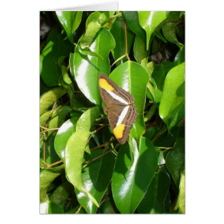 Butterfly on green note card