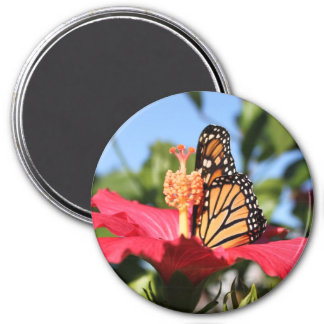 Butterfly on Hibiscus Magnet