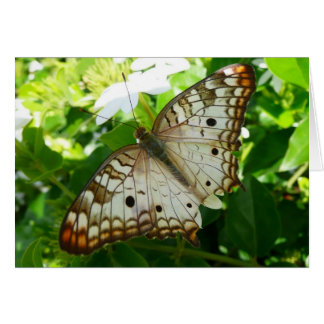 Butterfly on Jasmine Tropical Nature Photography Greeting Card