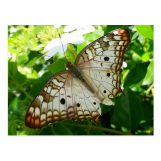 Butterfly on Jasmine Tropical Nature Photography Postcard