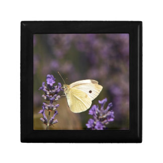 Butterfly on lavender gift box