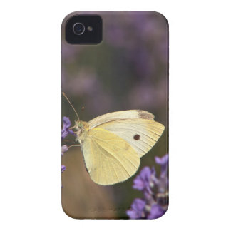 Butterfly on lavender iPhone 4 Case-Mate cases