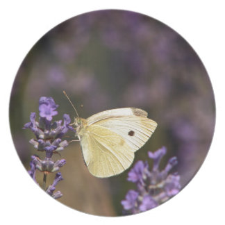 Butterfly on lavender plate